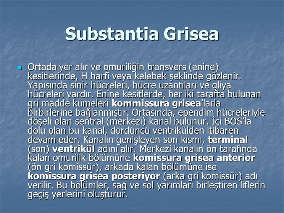 Substantia Grisea