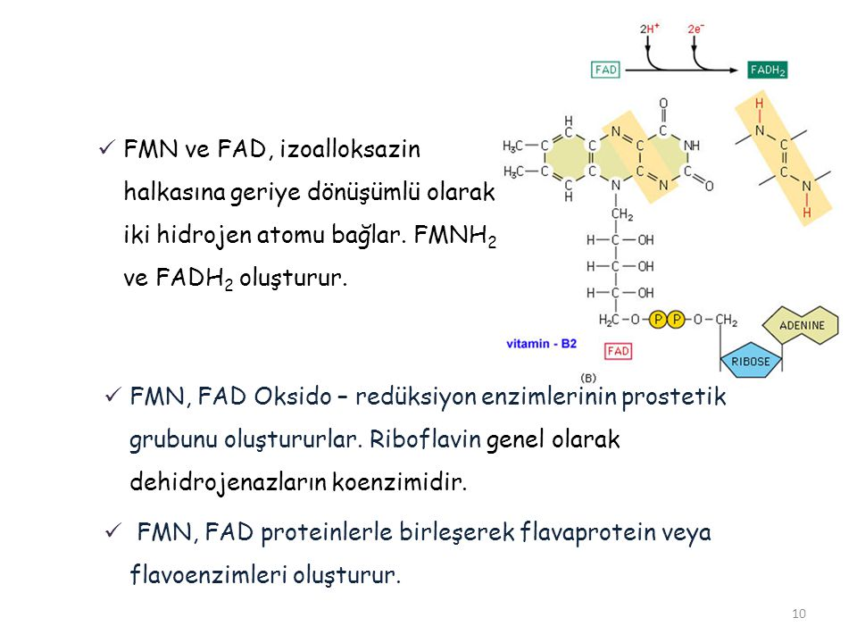 FMN ve FAD, izoalloksazin halkasına geriye dönüşümlü olarak iki hidrojen atomu bağlar. FMNH2 ve FADH2 oluşturur.