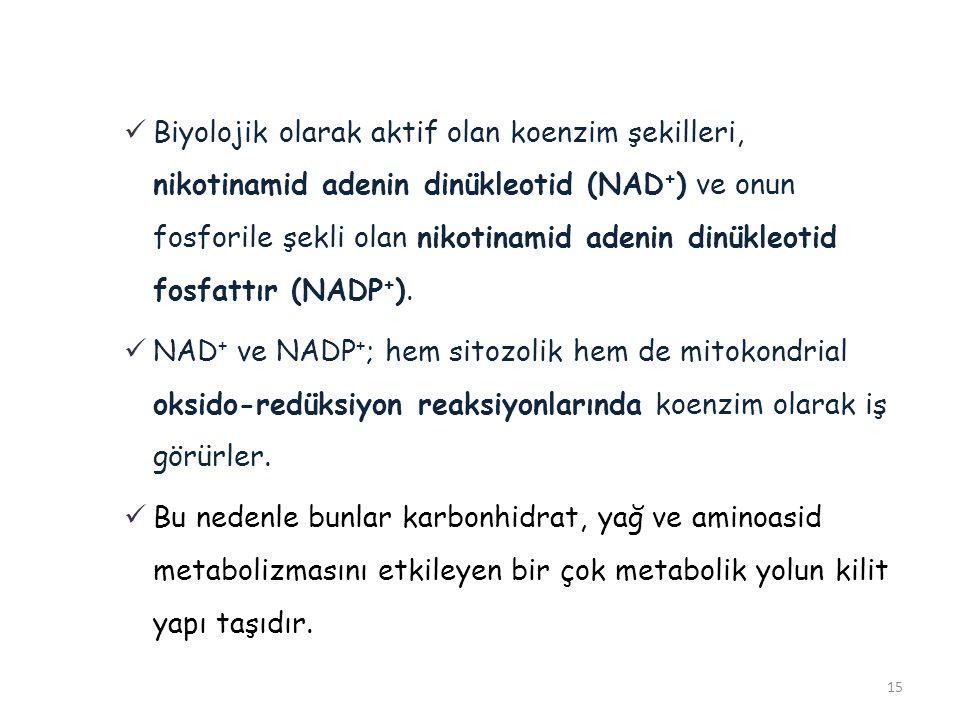 Biyolojik olarak aktif olan koenzim şekilleri, nikotinamid adenin dinükleotid (NAD+) ve onun fosforile şekli olan nikotinamid adenin dinükleotid fosfattır (NADP+).