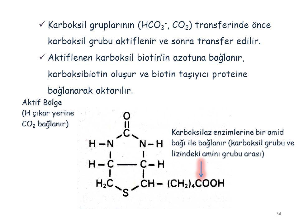 Karboksil gruplarının (HCO3-, CO2) transferinde önce karboksil grubu aktiflenir ve sonra transfer edilir.