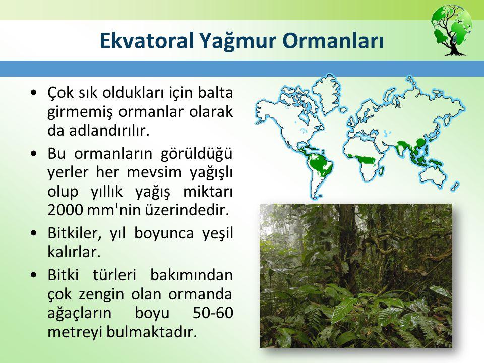 Ekvatoral Yağmur Ormanları