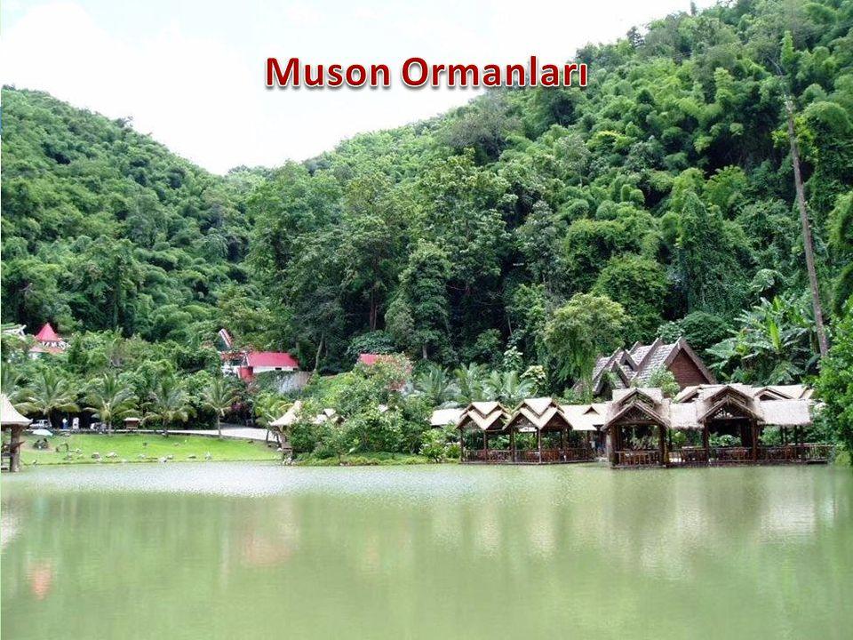 Muson Ormanları