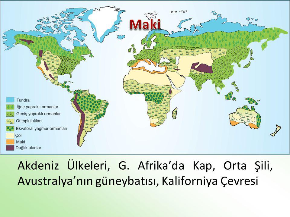 Maki Akdeniz Ülkeleri, G. Afrika'da Kap, Orta Şili, Avustralya'nın güneybatısı, Kaliforniya Çevresi