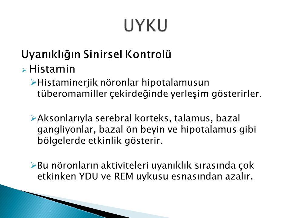 UYKU Uyanıklığın Sinirsel Kontrolü Histamin