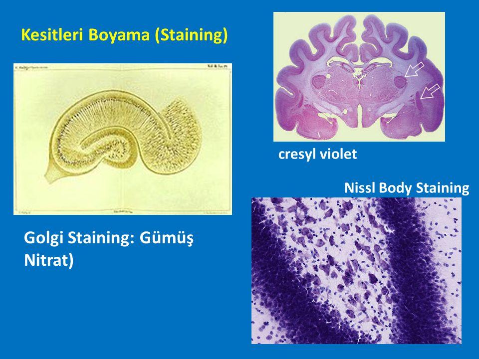 Kesitleri Boyama (Staining)