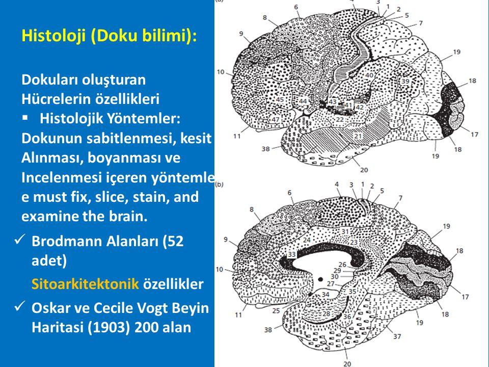 Histoloji (Doku bilimi):