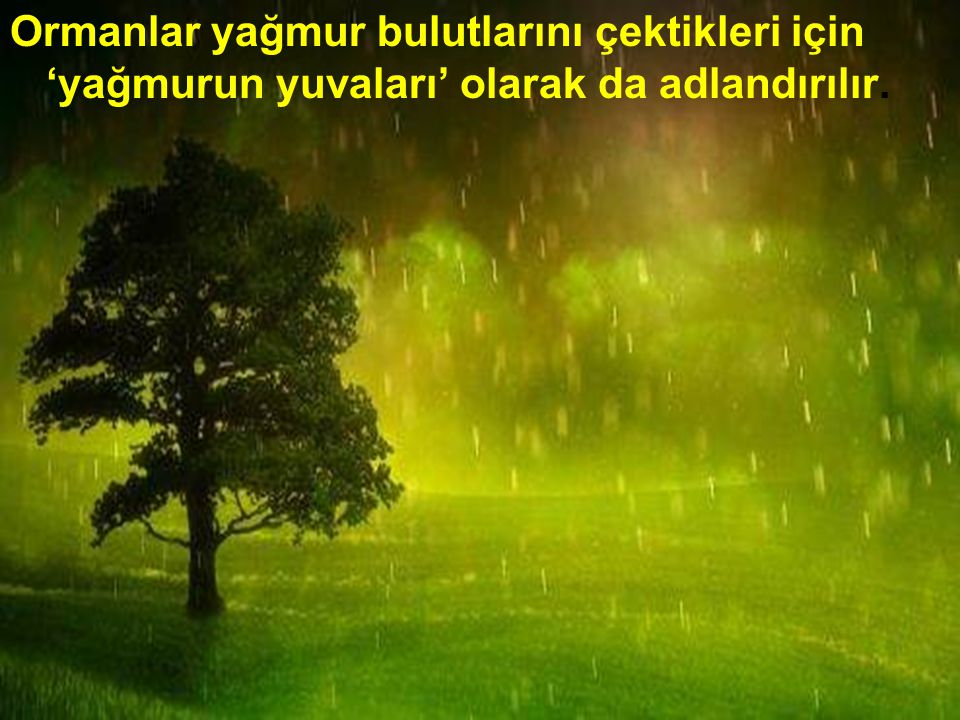 Ormanlar yağmur bulutlarını çektikleri için 'yağmurun yuvaları' olarak da adlandırılır.