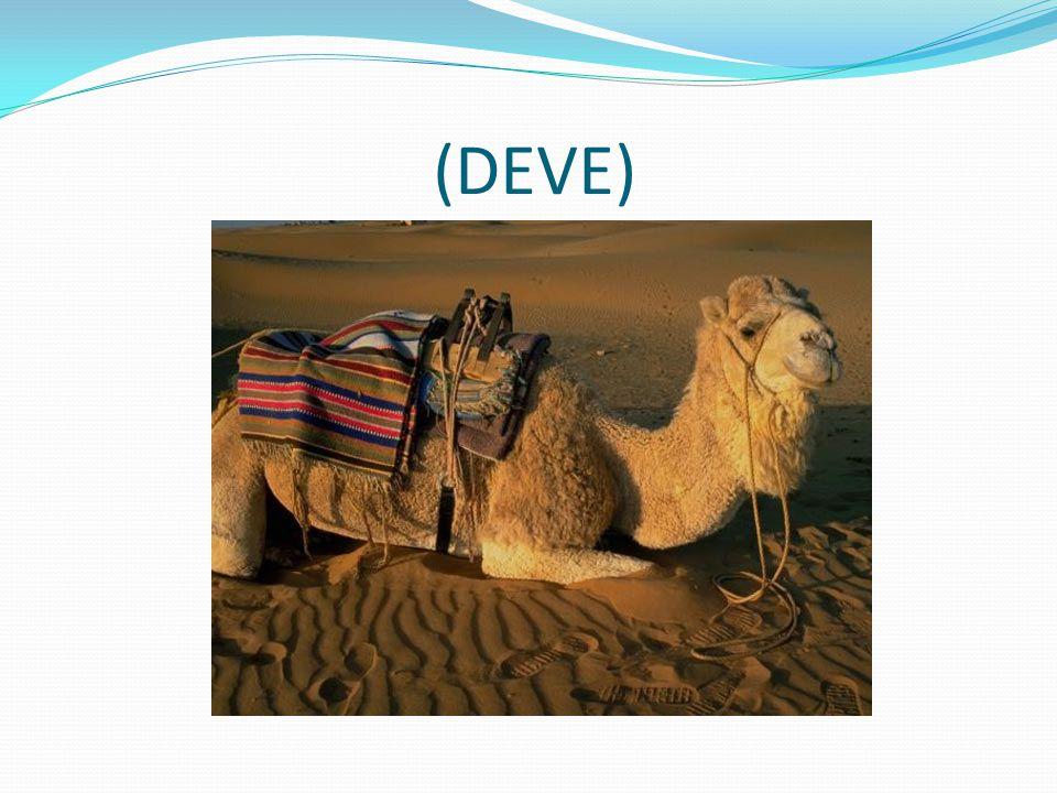 (DEVE)