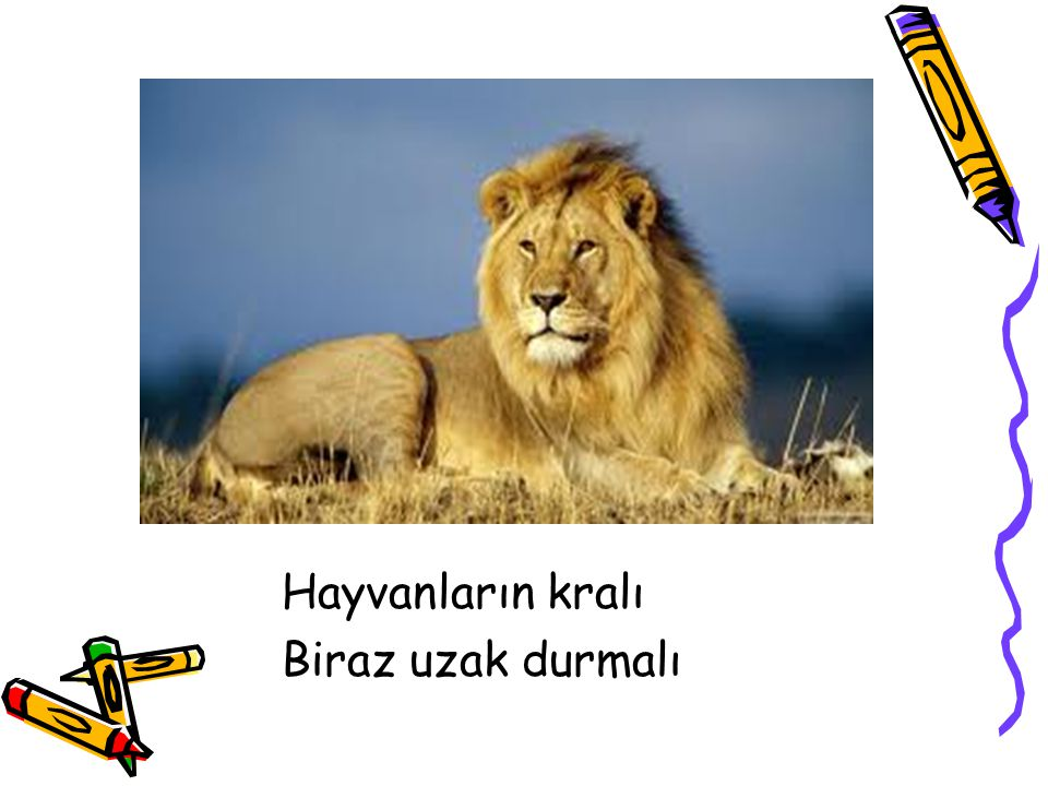 Hayvanların kralı Biraz uzak durmalı