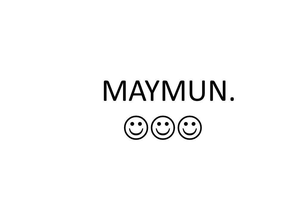 MAYMUN. 