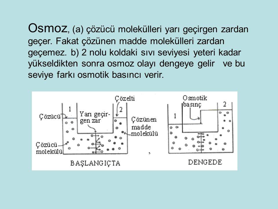 Osmoz, (a) çözücü molekülleri yarı geçirgen zardan geçer