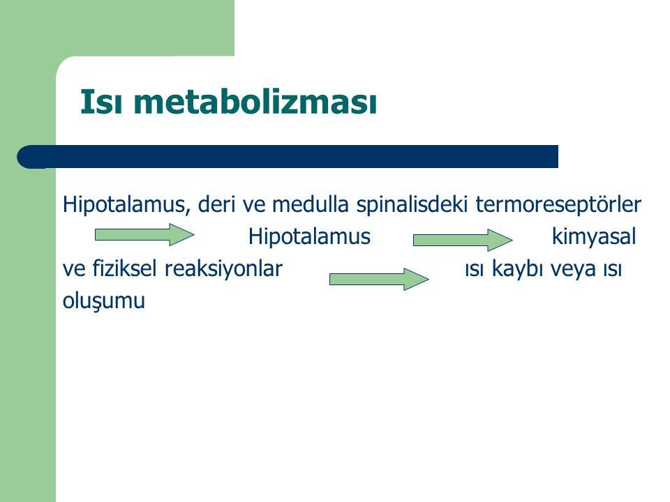 Isı metabolizması