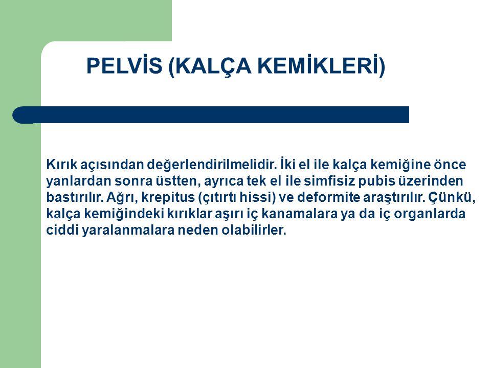 PELVİS (KALÇA KEMİKLERİ)