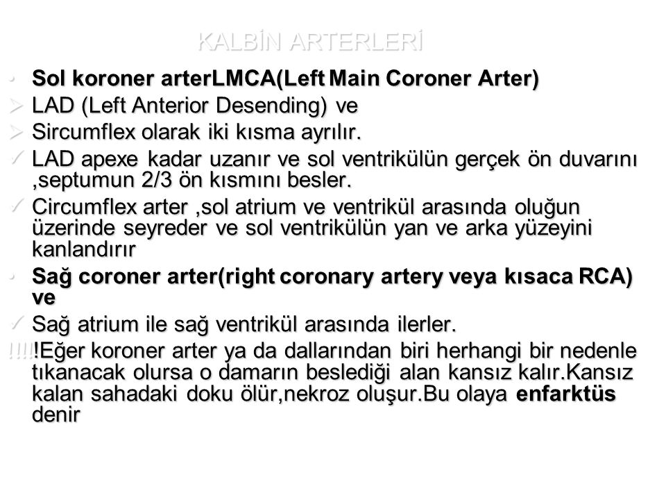 KALBİN ARTERLERİ Sol koroner arterLMCA(Left Main Coroner Arter)