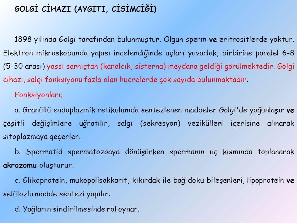 GOLGİ CİHAZI (AYGITI, CİSİMCİĞİ) 1898 yılında Golgi tarafından bulunmuştur.