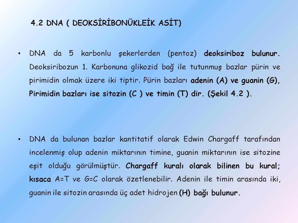 4.2 DNA ( DEOKSİRİBONÜKLEİK ASİT)
