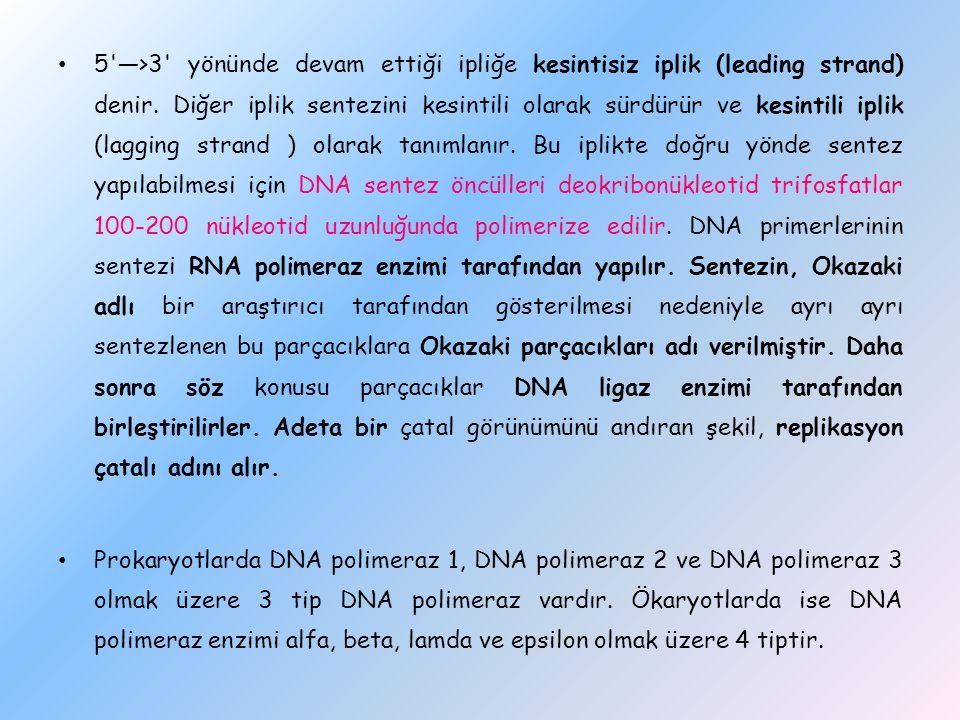5 —>3 yönünde devam ettiği ipliğe kesintisiz iplik (leading strand) denir. Diğer iplik sentezini kesintili olarak sürdürür ve kesintili iplik (lagging strand ) olarak tanımlanır. Bu iplikte doğru yönde sentez yapılabilmesi için DNA sentez öncülleri deokribonükleotid trifosfatlar 100-200 nükleotid uzunluğunda polimerize edilir. DNA primerlerinin sentezi RNA polimeraz enzimi tarafından yapılır. Sentezin, Okazaki adlı bir araştırıcı tarafından gösterilmesi nedeniyle ayrı ayrı sentezlenen bu parçacıklara Okazaki parçacıkları adı verilmiştir. Daha sonra söz konusu parçacıklar DNA ligaz enzimi tarafından birleştirilirler. Adeta bir çatal görünümünü andıran şekil, replikasyon çatalı adını alır.