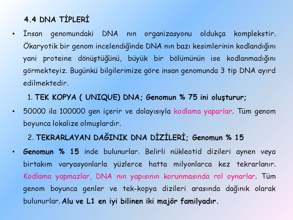 1. TEK KOPYA ( UNIQUE) DNA; Genomun % 75 ini oluşturur;