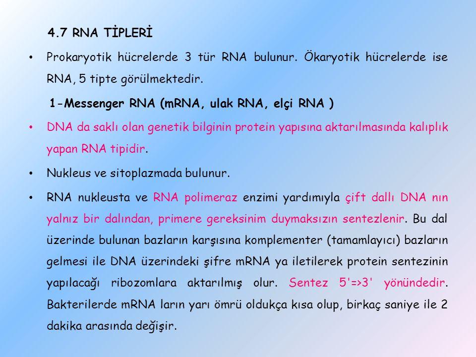 4.7 RNA TİPLERİ Prokaryotik hücrelerde 3 tür RNA bulunur. Ökaryotik hücrelerde ise RNA, 5 tipte görülmektedir.