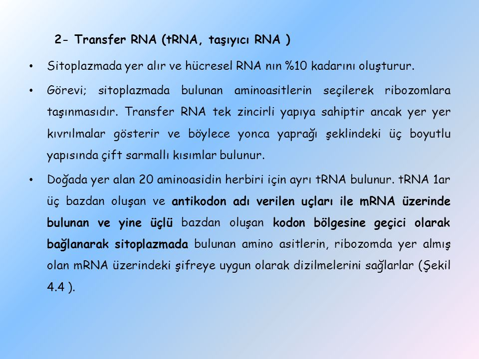 2- Transfer RNA (tRNA, taşıyıcı RNA )