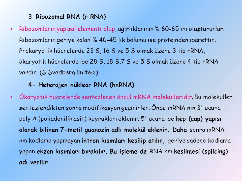 3-Ribozomal RNA (r RNA)