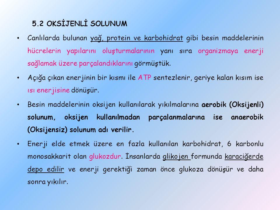 5.2 OKSİJENLİ SOLUNUM