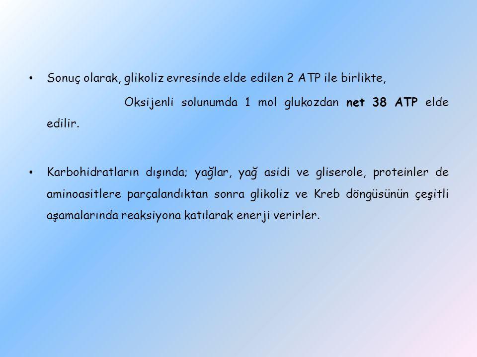 Sonuç olarak, glikoliz evresinde elde edilen 2 ATP ile birlikte,