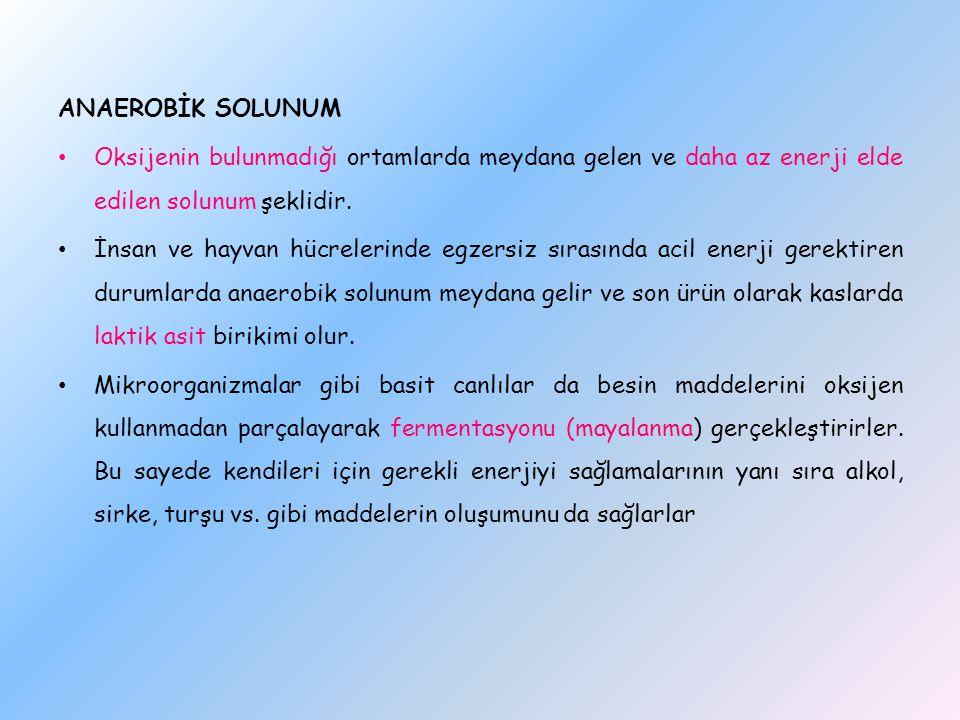 ANAEROBİK SOLUNUM Oksijenin bulunmadığı ortamlarda meydana gelen ve daha az enerji elde edilen solunum şeklidir.