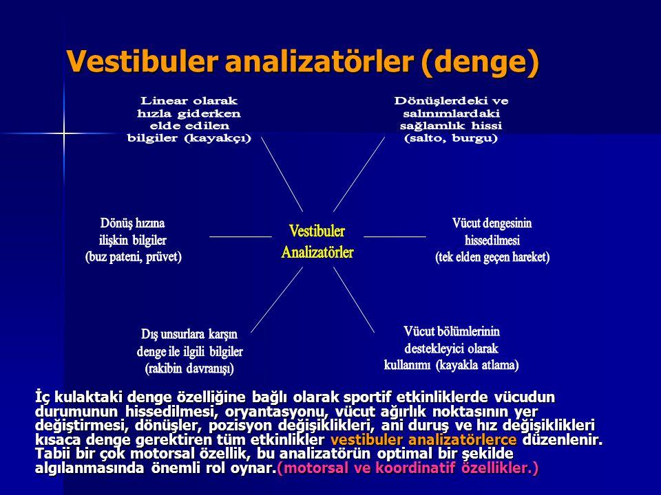 Vestibuler analizatörler (denge)