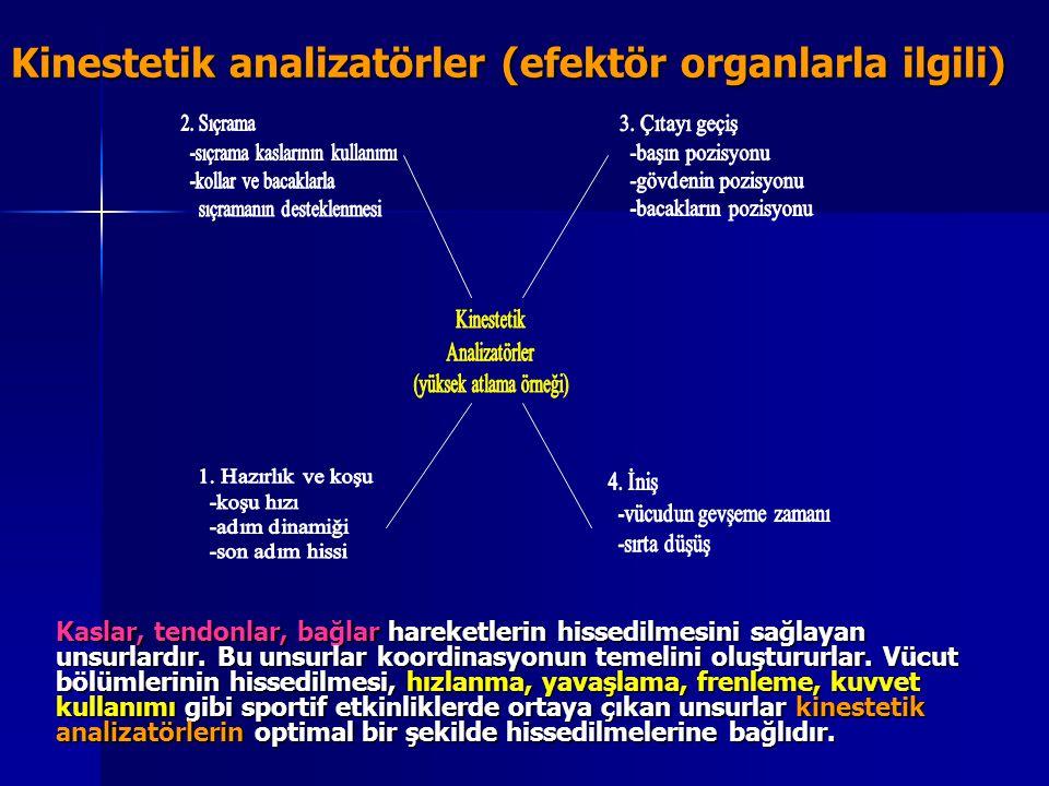 Kinestetik analizatörler (efektör organlarla ilgili)