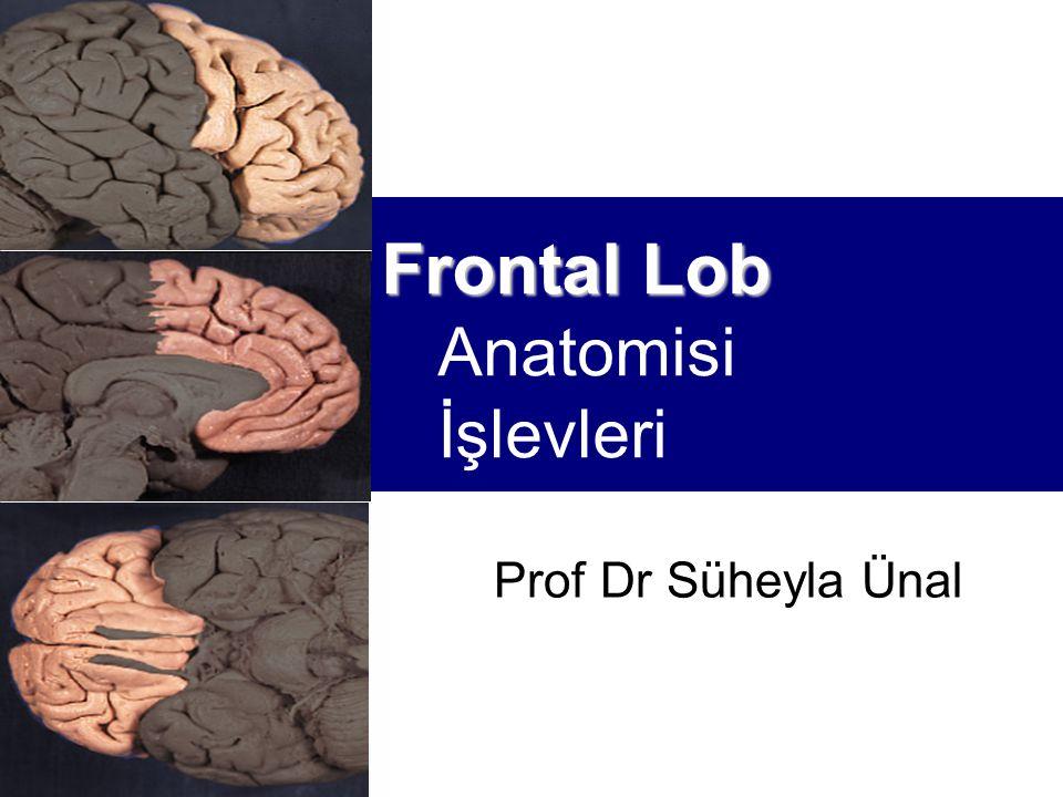 Frontal Lob Anatomisi İşlevleri
