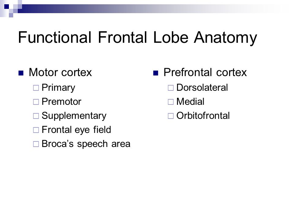 Functional Frontal Lobe Anatomy