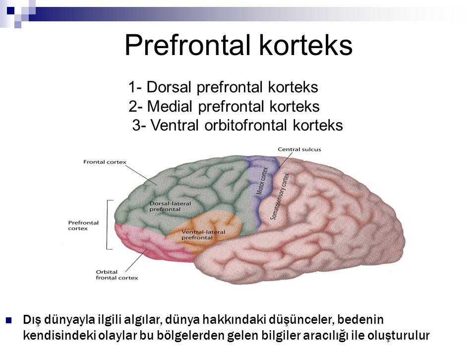 Prefrontal korteks 2- Medial prefrontal korteks