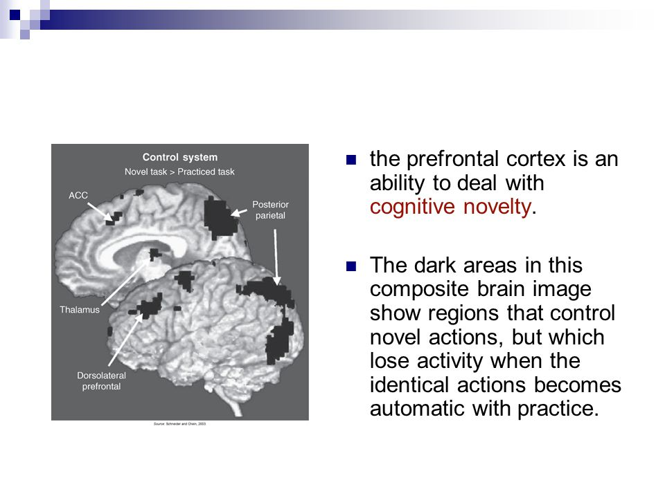 the prefrontal cortex is an ability to deal with cognitive novelty.