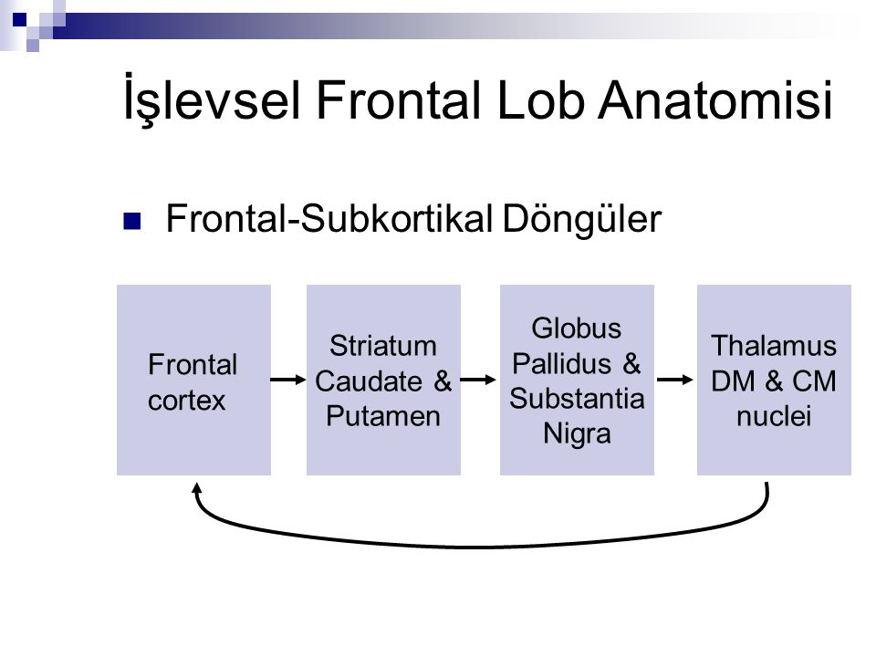 İşlevsel Frontal Lob Anatomisi