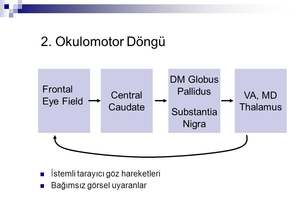 2. Okulomotor Döngü Frontal Eye Field Central Caudate DM Globus