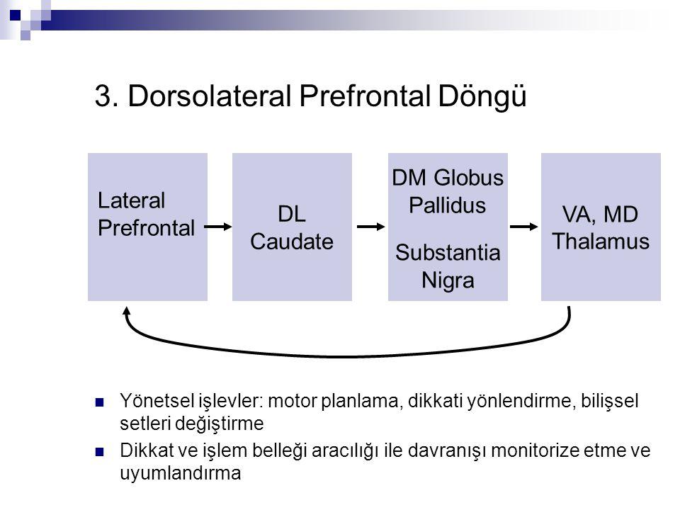 3. Dorsolateral Prefrontal Döngü