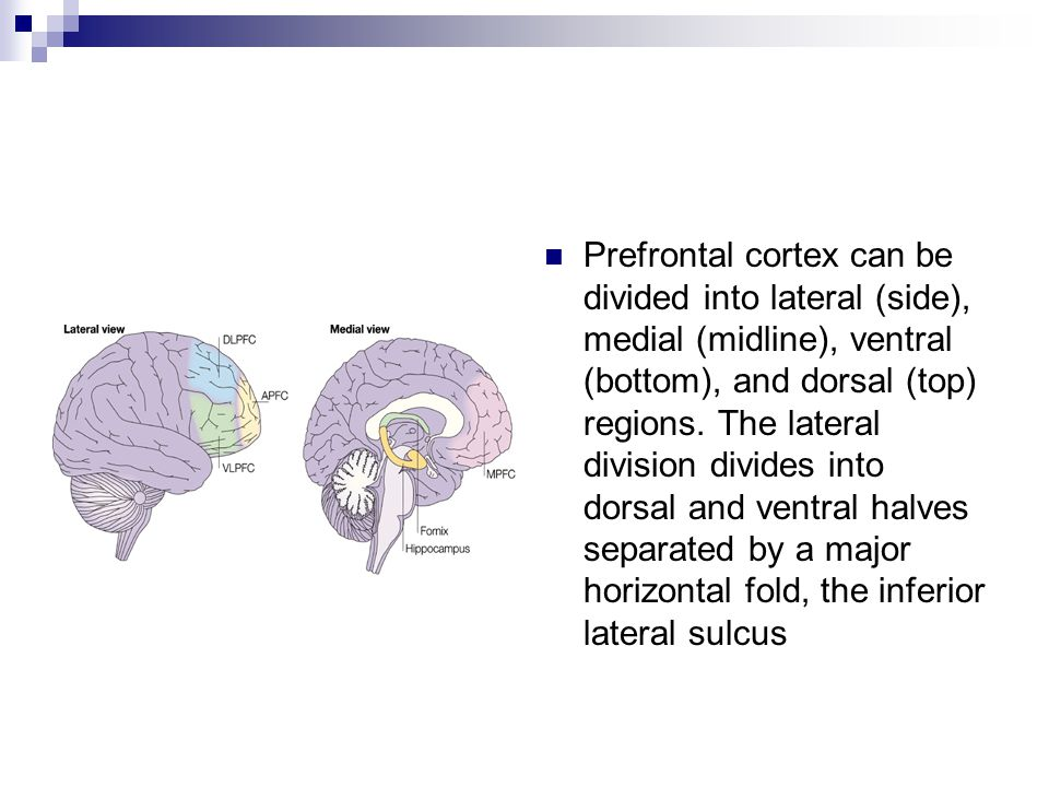 Prefrontal cortex can be divided into lateral (side), medial (midline), ventral (bottom), and dorsal (top) regions.