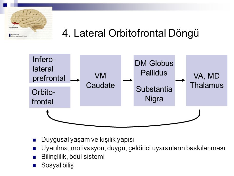 4. Lateral Orbitofrontal Döngü