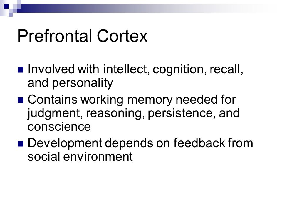 Prefrontal Cortex Involved with intellect, cognition, recall, and personality.