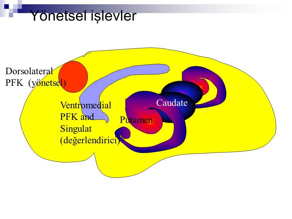Yönetsel işlevler Dorsolateral PFK (yönetsel) Caudate v Ventromedial