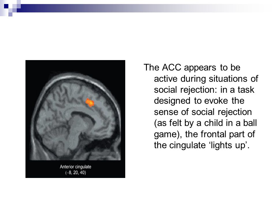The ACC appears to be active during situations of social rejection: in a task designed to evoke the sense of social rejection (as felt by a child in a ball game), the frontal part of the cingulate 'lights up'.