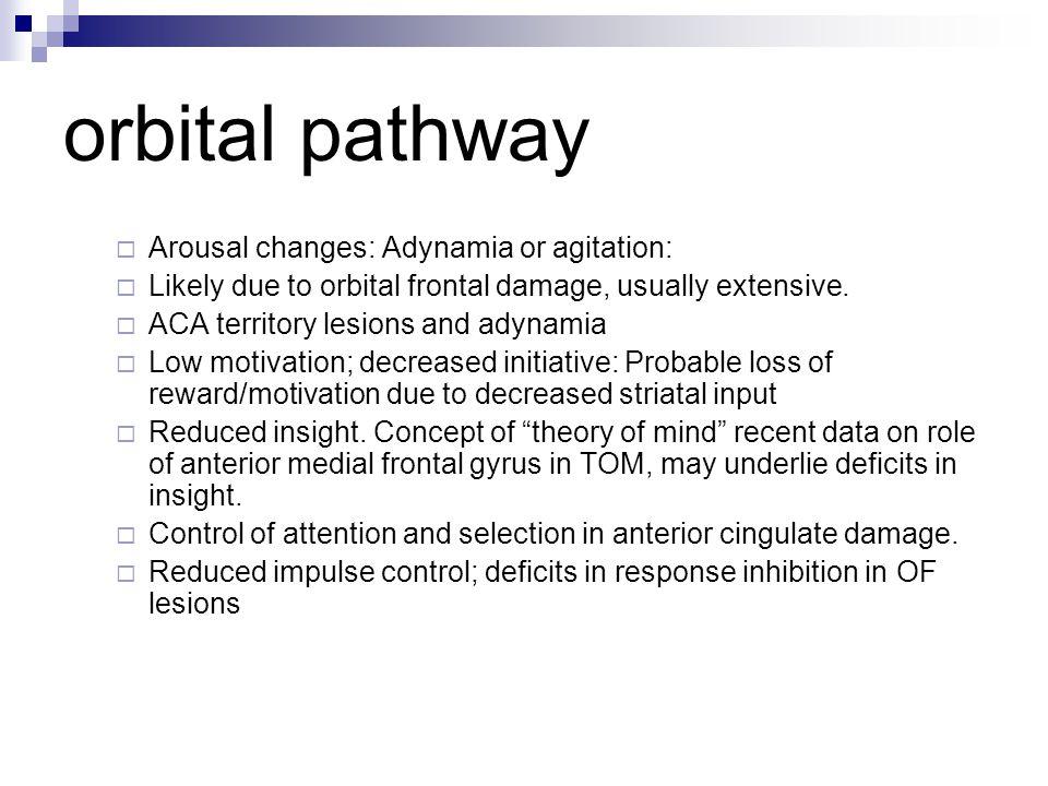 orbital pathway Arousal changes: Adynamia or agitation: