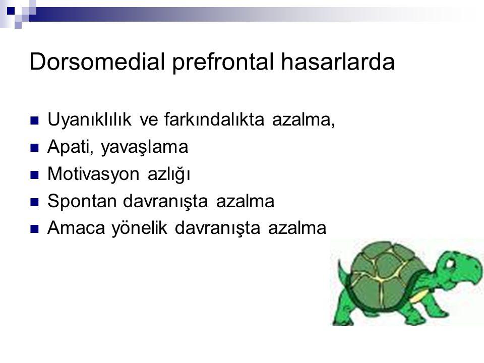 Dorsomedial prefrontal hasarlarda