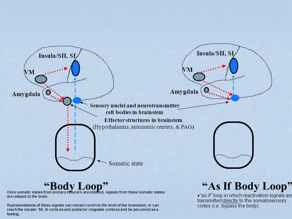 Body Loop As If Body Loop Insula/SII, SI VM Amygdala Somatic state