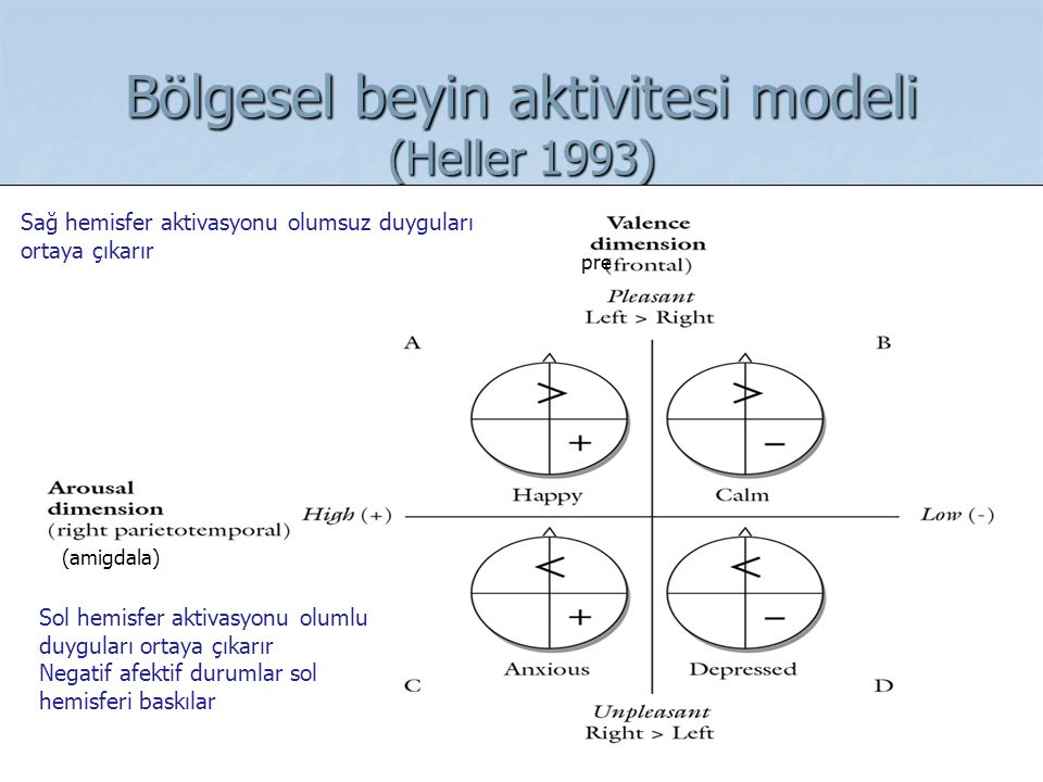 Bölgesel beyin aktivitesi modeli (Heller 1993)