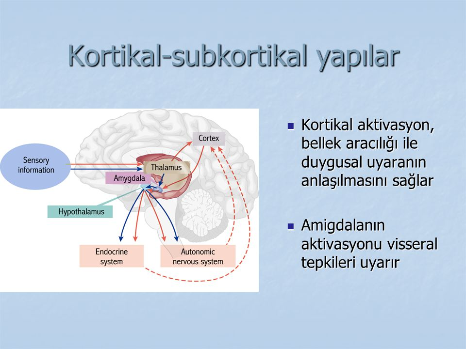 Kortikal-subkortikal yapılar