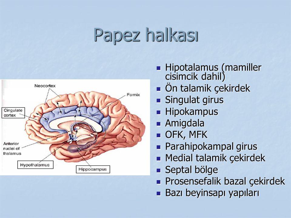 Papez halkası Hipotalamus (mamiller cisimcik dahil)