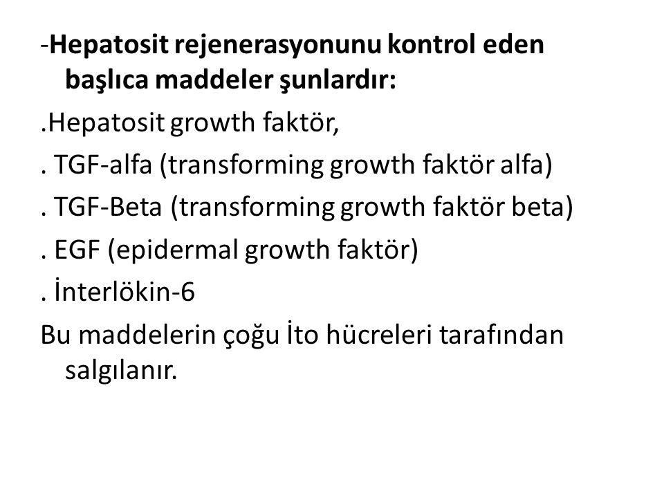 -Hepatosit rejenerasyonunu kontrol eden başlıca maddeler şunlardır: