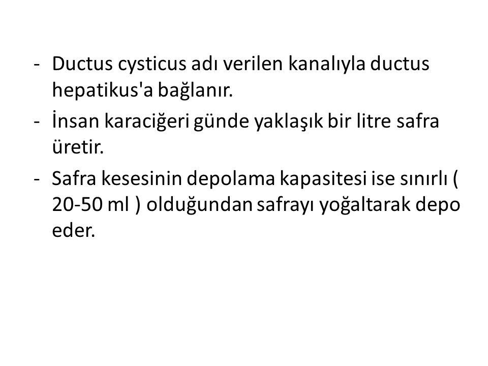 Ductus cysticus adı verilen kanalıyla ductus hepatikus a bağlanır.